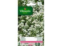 Alyssum Zilverkorfje - Sc-Vilmorin