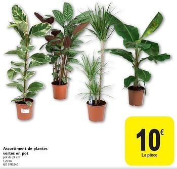 promotion Carrefour: Assortiment de plantes vertes en pot ...