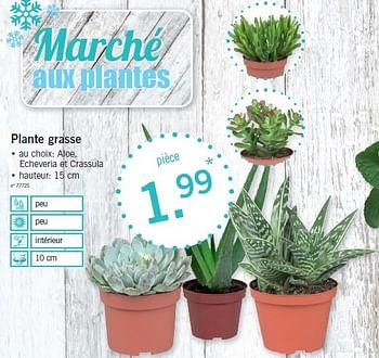 promotion Lidl: Plante grasse - Produit maison - Lidl ...