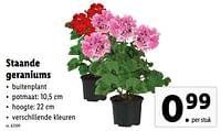 Staande geraniums-Huismerk - Lidl