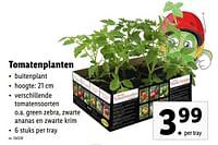 Tomatenplanten-Huismerk - Lidl