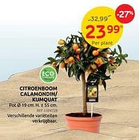 Citroenboom calamondin- kumquat-Huismerk - Brico