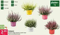 Heideplant-Huismerk - Aldi