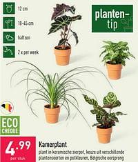 Kamerplant-Huismerk - Aldi