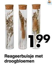 Reageerbuisje met droogbloemen-Huismerk - Wibra