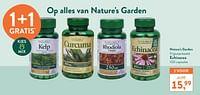 Echinacea-Nature