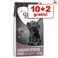 10 + 2 kg gratis! 12 kg Concept for Life Hondenvoer - Large Senior-For You