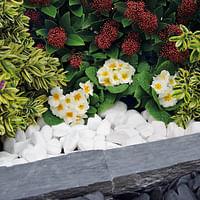 Penez Herman witte kiezelsteen Snow white 30/60mm-Cross Garden