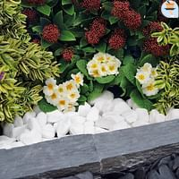 Penez Herman witte kiezelsteen Snow white 30/60mm-Garden Feelings