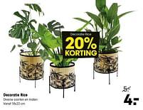 Aanbiedingen Decoratie rice - Huismerk - Kwantum - Geldig van 19/07/2021 tot 08/08/2021 bij Kwantum